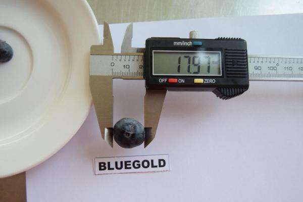 masurarea-calibrului-afinelor-horting-bucuresti3D466972-792D-0159-EA00-DE6E0B5B6755.jpg