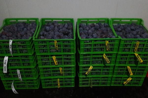 receptia-pruneor-ecologice-de-la-icdp-maracineni864A1402-83B4-E12E-1437-D3CEFD1BA1C5.jpg